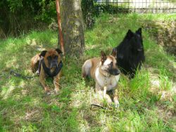 groupe-chiens